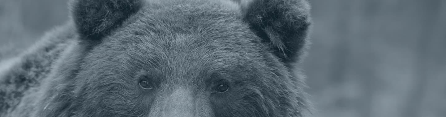 brown bear hunting bosnia and montenegro