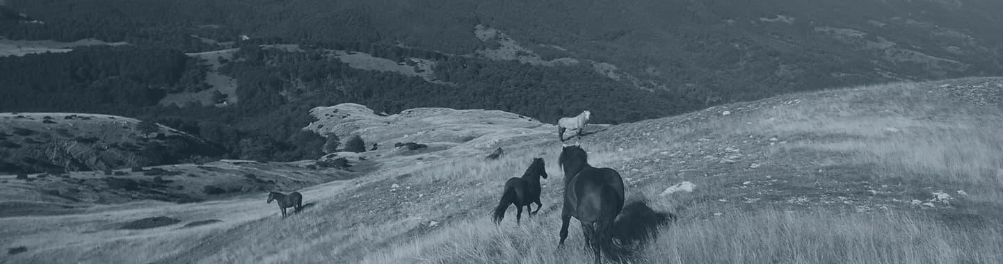 jahanje konja nacionalni park durmitor