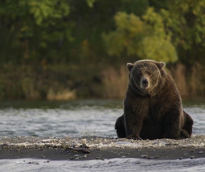 hunting fishing animals bear