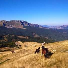 horse-riding-activity
