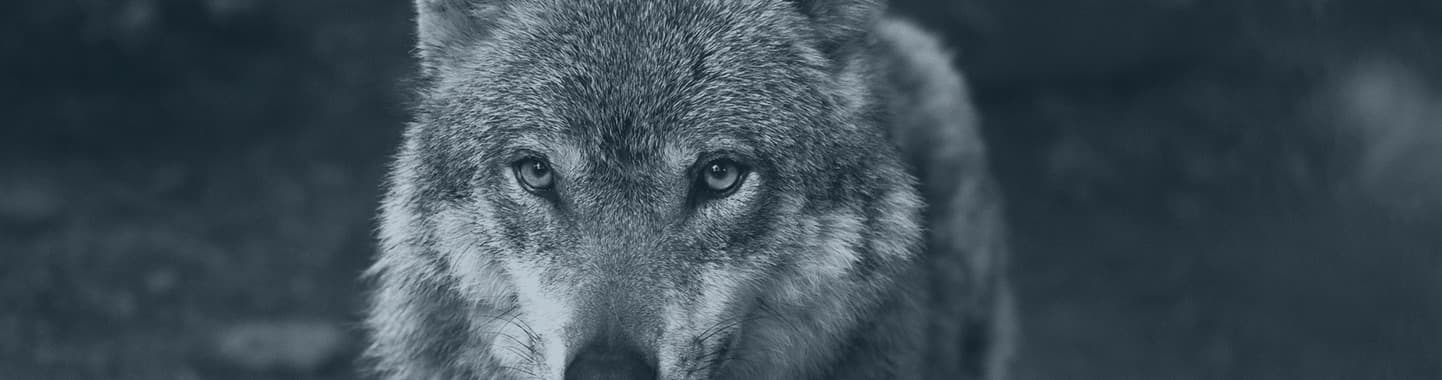 wolf hunting bosnia and montenegro